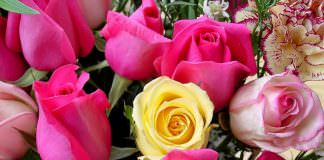 le rose | ilmondodisuk.com