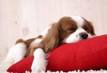 cane | ilmondodisuk.com
