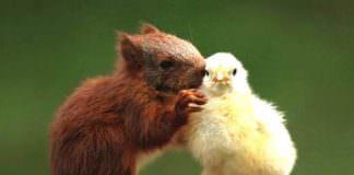 animali | ilmondodisuk.com