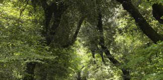 bosco di capodimone | ilmondodisuk.com