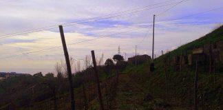 vigne| ilmondodisuk.com
