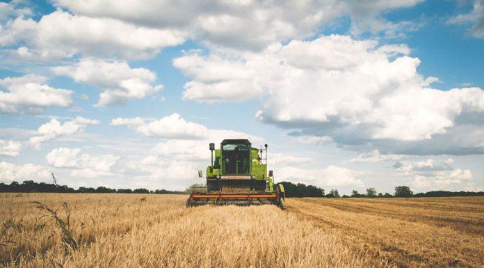 agriculture| ilmondodisuk.com