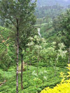 sri Lanka| ilmondodisuk.com