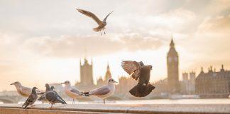 Londra| ilmondodoisuk.com