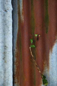 """Qui sopra, """"Back to life"""". In alto, Pina Della Rossa nel suo studio"""