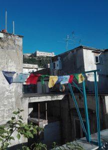 Cavalli-Tibetani-(2)