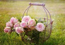 rose| ilmondodisuk.com